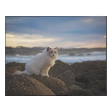 Beach Themed Ragdoll Cat At The Beach Wood Wall Art