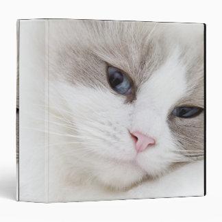 Ragdoll cat 3 ring binder