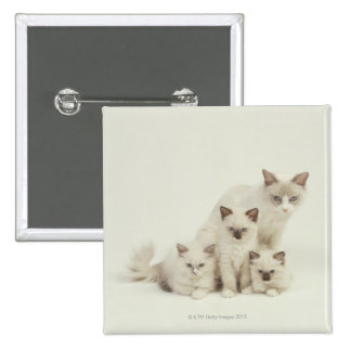 Ragdoll cat female with kittens 2 inch square button