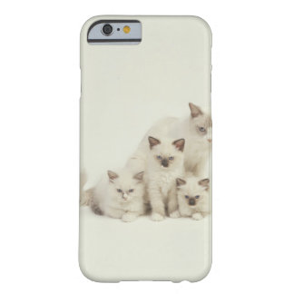 Ragdoll cat female with kittens barely there iPhone 6 case