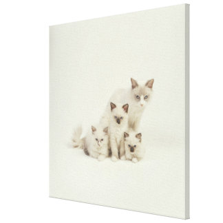 Ragdoll cat female with kittens canvas print