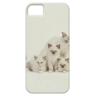 Ragdoll cat female with kittens iPhone SE/5/5s case