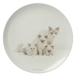 Ragdoll cat female with kittens melamine plate