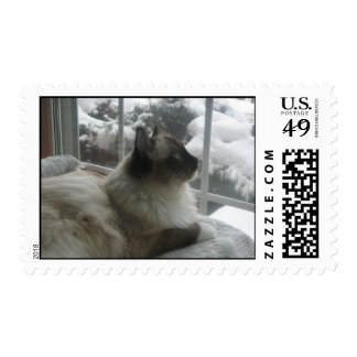 Ragdoll Cat Gazing at Christmas Scenery Postage