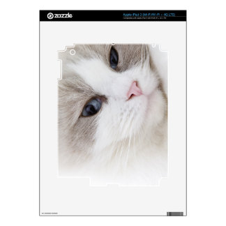 Ragdoll cat iPad 3 decal