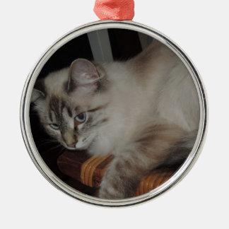 Ragdoll Cat Kitten Original Photo Design Metal Ornament