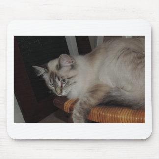 Ragdoll Cat Kitten Original Photo Design Mouse Pad