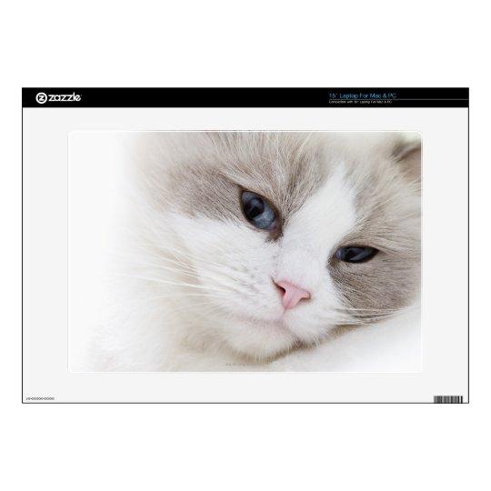 Ragdoll cat laptop skins