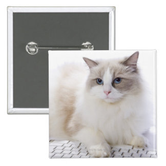 Ragdoll cat on computer keyboard 2 inch square button
