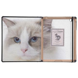 Ragdoll cat on computer keyboard iPad folio case