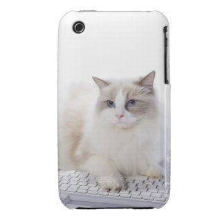 Ragdoll cat on computer keyboard Case-Mate iPhone 3 case