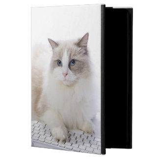 Ragdoll cat on computer keyboard cover for iPad air