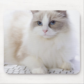 Ragdoll cat on computer keyboard mouse pad