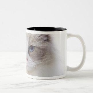 Ragdoll cat on computer keyboard mugs