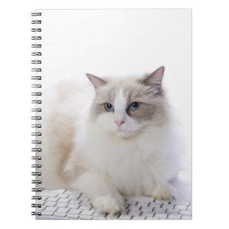 Ragdoll cat on computer keyboard notebook