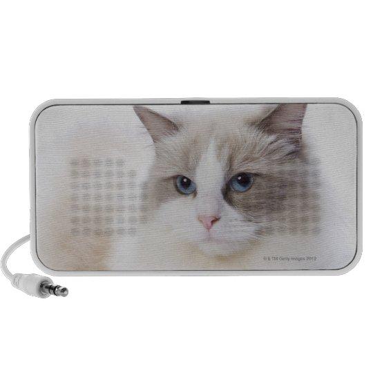 Ragdoll cat on computer keyboard portable speaker
