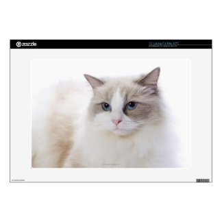 "Ragdoll cat on computer keyboard skin for 15"" laptop"