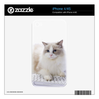 Ragdoll cat on computer keyboard skins for iPhone 4