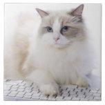 Ragdoll cat on computer keyboard tile