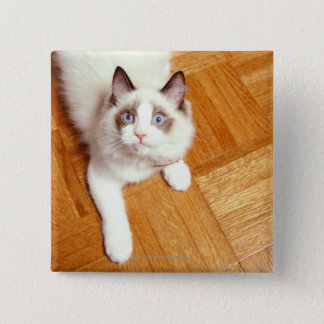 Ragdoll cat on floor, elevated view pinback button