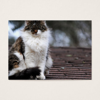Ragdoll Cat On Roof Business Cards