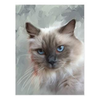Ragdoll Cat Post Card