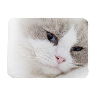 Ragdoll cat rectangular photo magnet