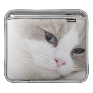 Ragdoll cat sleeves for iPads