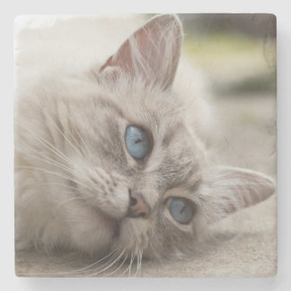 Ragdoll Cat Stone Coaster