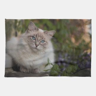 Ragdoll Cat Tea Towel
