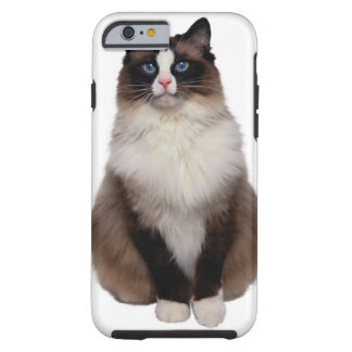 Ragdoll Cat Tough iPhone 6 Case