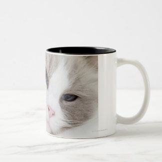 Ragdoll cat Two-Tone coffee mug