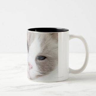 Ragdoll cat Two-Tone coffee mug
