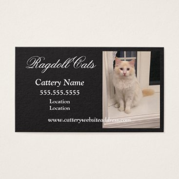 Professional Business Ragdoll Cattery Business Cards - Black w White