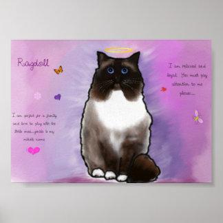 Ragdoll hermoso dulce póster