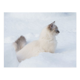 Ragdoll in the snow post card