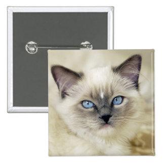 Ragdoll kitten 2 inch square button