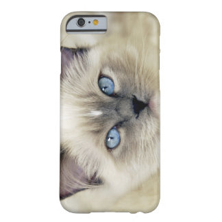 Ragdoll kitten barely there iPhone 6 case