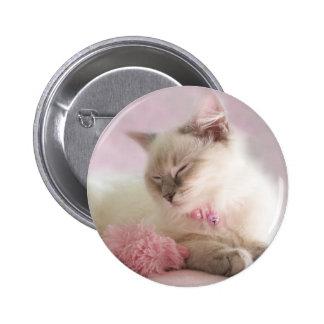ragdoll kitten button