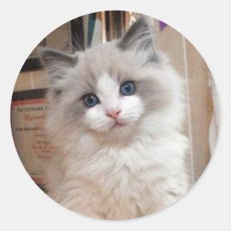 Ragdoll Kitten Cutie Classic Round Sticker