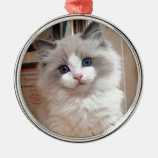 Ragdoll Kitten Cutie Ornament