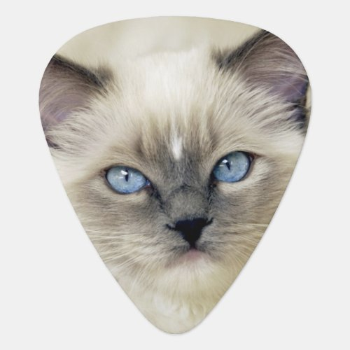 Ragdoll kitten guitar pick