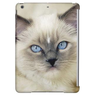 Ragdoll kitten iPad air case