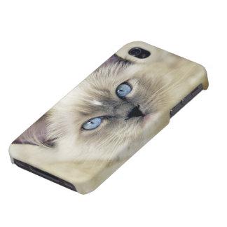 Ragdoll kitten iPhone 4/4S covers