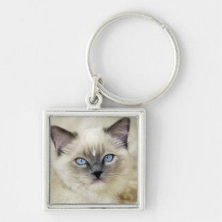 Ragdoll kitten keychain