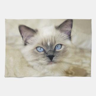 Ragdoll kitten kitchen towel