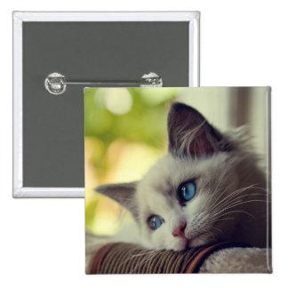 Ragdoll Kitten Looking Out The Window Button