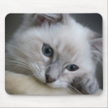 "ragdoll kitten mousepad<br><div class=""desc"">a mousepad with a photo of a ragdoll kitten on it</div>"