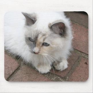 Ragdoll kitten mouse pad
