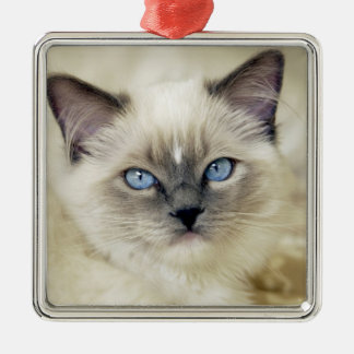 Ragdoll kitten christmas tree ornament